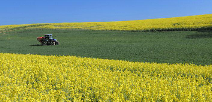 Rapeseed, Field, Yellow, Green, Tractor