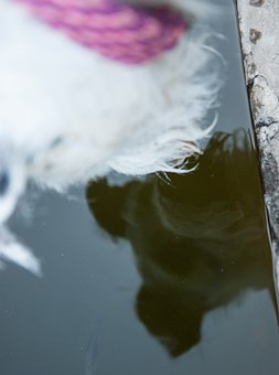 Dog, Water, Mirroring, Head, Snout, Angle, Pet, Animal