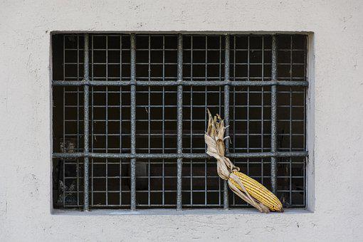 Window, Corn On The Cob, House, Winter