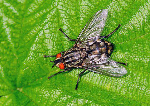 Nature, Garden, Insect, Fly, Bluebottle