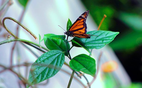 Photography, Butterfly, Leaves, Nature, Insectarium