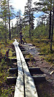 Duckboards, Lapland, Finnish, Nature, Forest, Hike