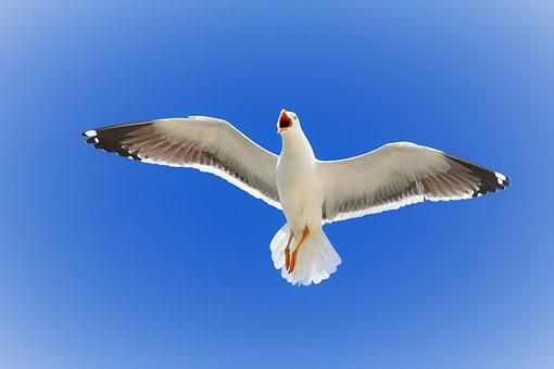 Seagull, Flying, Freedom, Sky, Herring Gull, Sea
