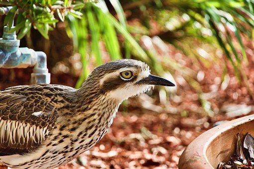 Curlew, Bird, Wildlife, Wild, Birdlife, Camouflage