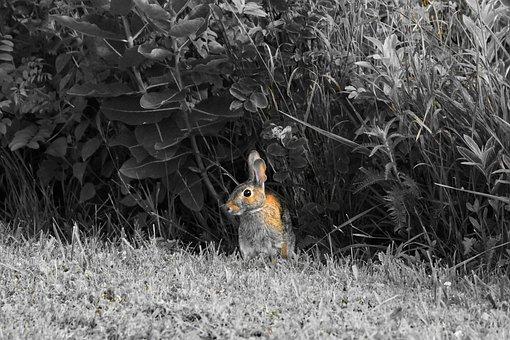 Precaution, Animal, Bunny, Wildlife, Gray Bunny