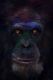 Animal, Monkey, Chimpanzee, Wild Animal
