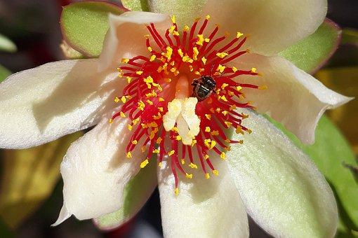 Flower, White, Flowers, Garden, Plant, Petals, Bee
