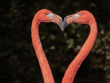 Flamingos, Waterfowl, Birds, Animals, Neck, Heart Shape