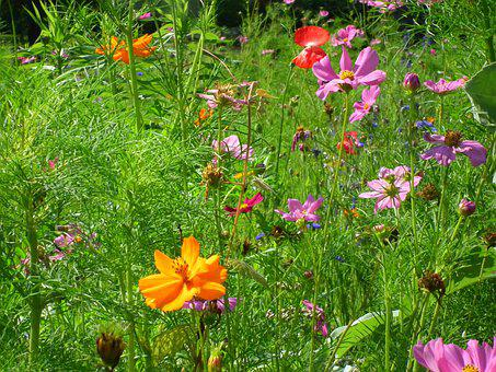 Wildflowers, Nature, Outdoors, Flowers, Spring, Grass