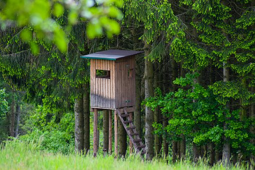 Hunting Stand High, Nature, Forest, Hunt, Landscape