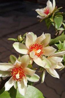 Flower, White, Flowers, Garden, Plant, Petals
