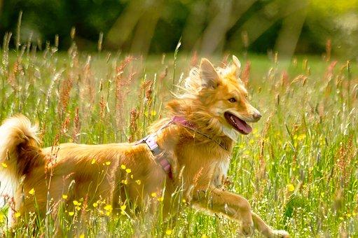 Dog, Meadow, Animal, Nature, Pet, Grass, Cute, Hybrid
