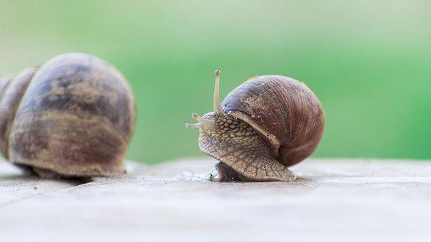 Snail, Nature, Mäkkýš, Slowly, Garden