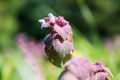 Pink, Flower, Purple, Plant, Blossom