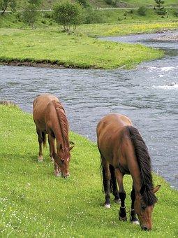 Horses, Brown, Pasture, Stream Beach, Life, Water