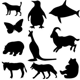 Silhouette, Dog, Penguin, Fish, Butterfly, Kangaroo
