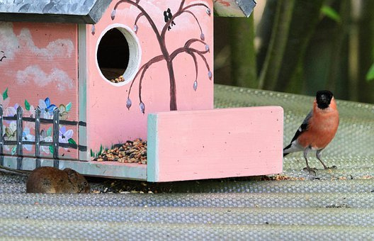 Bullfinch, Gimpel, Mouse, Field Mouse, Food
