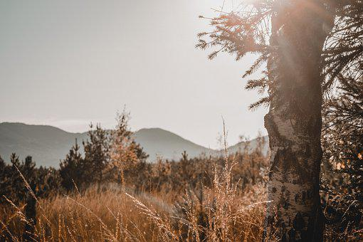Mood, Sunset, Nature, Out, Tree, Mountains, Sky, Rest