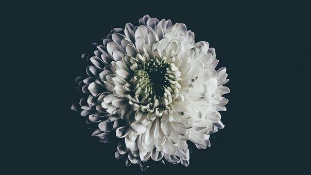 Flower, White Flower, Spring, White