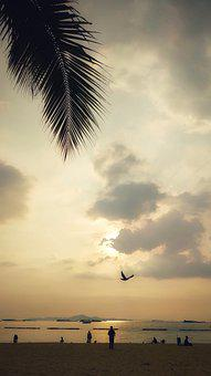 Sunset, Sun, Birds, Freedom, Nature, Sea, Flying