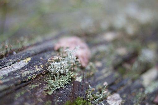 Lichen, Detail, Macro, Rot, Nature, Moss
