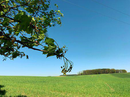 Branch, Deciduous Tree, Early Summer Pasture Plant