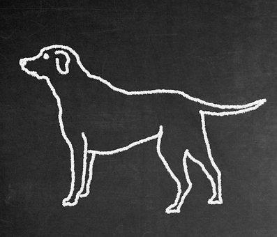 Dog, Labrador, Animal, Retriever, Pet, Race, Drawing