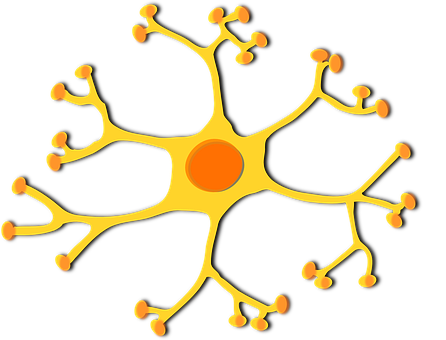 Neuron, Cell, Nucleus, Dendrites