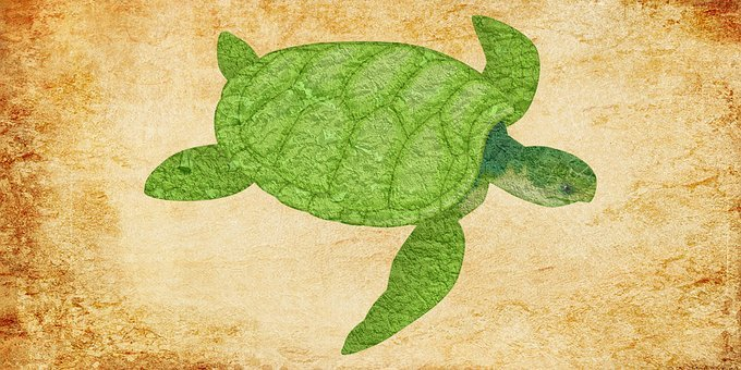 Turtle, Turtle Vintage, Vintage, Green Turtle, Animal