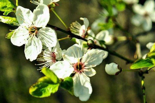 Flowering Time, Green, Nature, Garden, Color, Flora