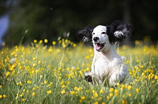 Pup, Puppy, Dog, Animal, Cute, Pet, Canine, Friend