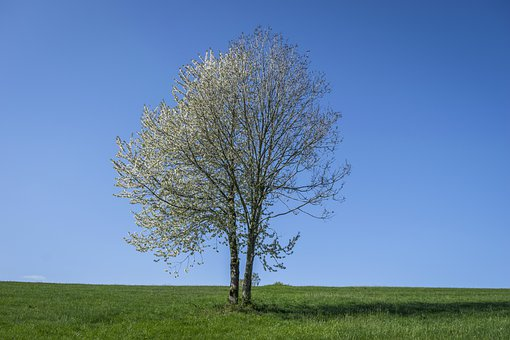 Tree, Landscape, Nature, Meadow, Sky