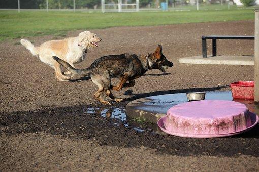 Dog, Canine, Dog Park, Animal, Nature, Running