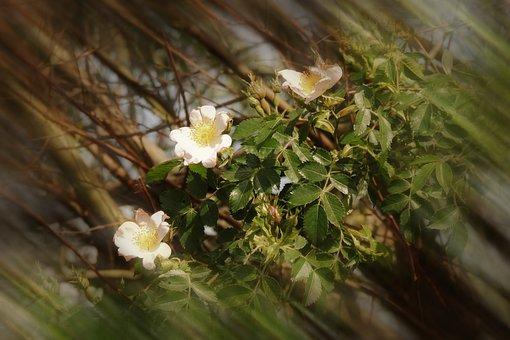 Tree, Flower, Spring, Nature, Prairie