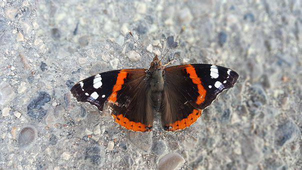 Butterfly, Amazing, Insect, Nature, Colorful, Wings