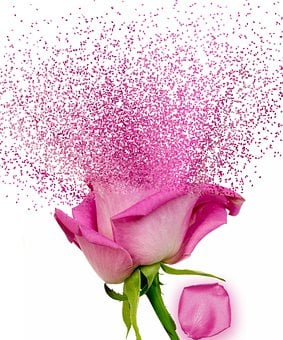 Dispersion, Flower, Rosa, Effect, Pink