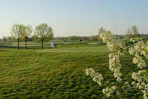 Blossoms, White Blossms, Golf, Tree