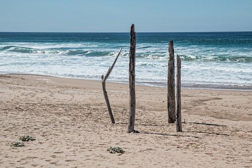 Seaside, Beach, Alone, Isolated, Lonely, Driftwood