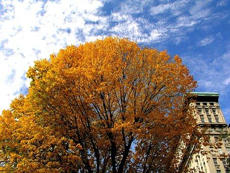 Skyline, Clouds, Blue, Sky, Autumn, Environment, Fall