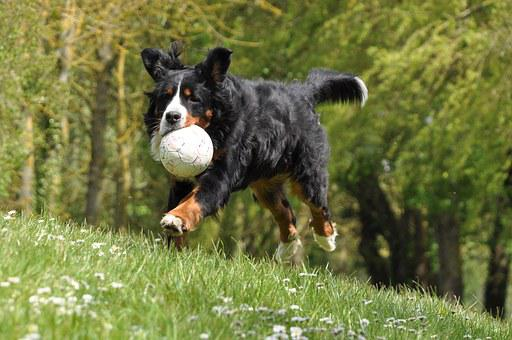 Dog, Domestic Animal, Animal, Pet, Cute, Family