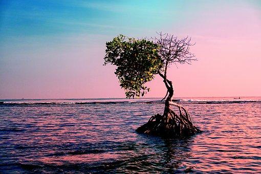 Landscape, Water, Tree, Nature, Sea, Sky, Trunk