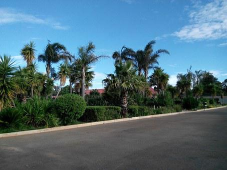 Bosasa, Business, Park, Palm Trees, Street, Road
