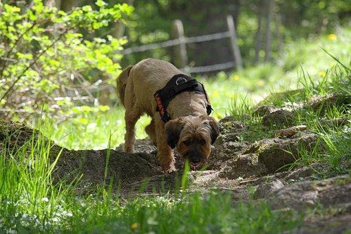 Dog, Nature, Hundeportrait, Plays, Addiction, Sniffing