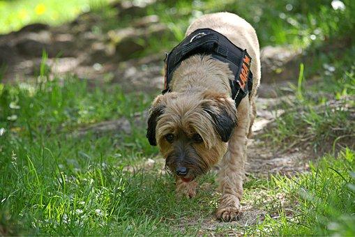 Dog, Nature, Plays, Addiction, Sniffing, Curious
