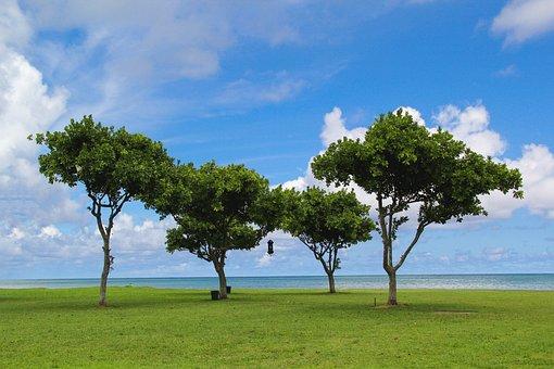 Hawaii, Oahu, Trees, Beach, Ocean, Hawaiian, Travel
