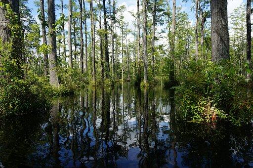 Swamp, Trees, Lily, Pads, Wildlife, Wilderness