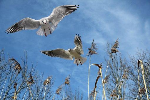 Gulls, Fly, Bird, Sky, Wing, Freedom, Locomotion