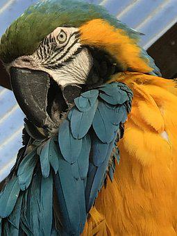 Bird, Macaw, Colourful, Exotic, Plumage