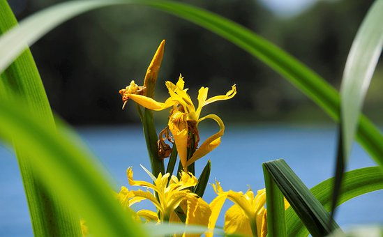 Nature, Flowers, Spring, Yellow, Petals, Oeverplant