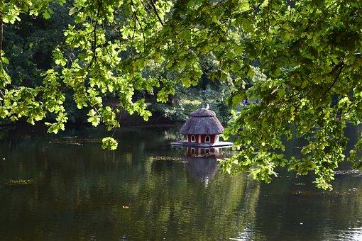 Green, Pond, Lake, Water, Ducks, Leaves, Nature, Bremen